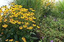 Perennial garden designed by New England Hardscapes for a Bedford NH landscape